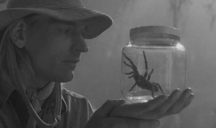 Боится пауков