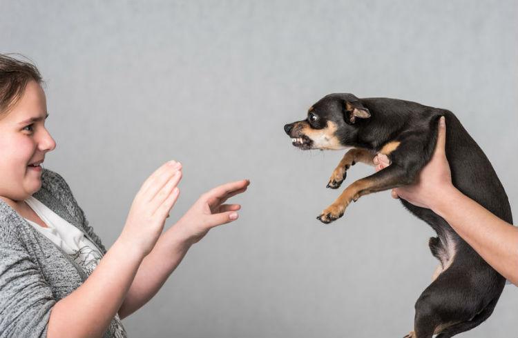 Кинофобия - Страх к Собакам, Собачьему Лаю
